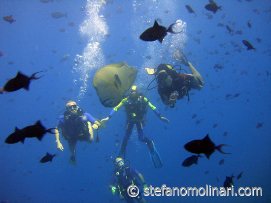 Der weltweit gr��te Fisch - Malediven Tauchen - Malediven